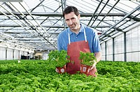 Germany, Bavaria, Munich, Mature man in greenhouse between parsley plants