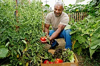 Black man gathering vegetables in community garden