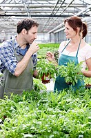 Germany, Bavaria, Munich, Mature man and woman in greenhouse, tasting rocket plant