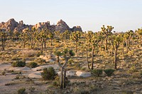 USA, California, Joshua Tree National Park, Hidden Valley