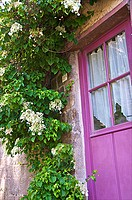 Beautiful mauve painted door with flowering creeper plant, Dinan, Brittany, Cotes d'Armor, France, Europe