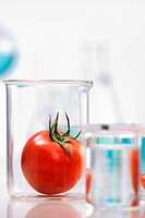 Tomato in laboratory container