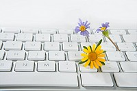 Concept of flowers growing from computer