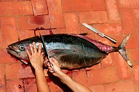 Bloody Mediterranean tuna fish preparation