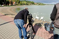 Operator shooting the water birds swans pigeons