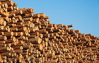 Stacks of logs to be used for lumber, Coos Bay, Oregon