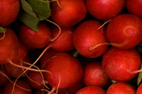 Close_up of a pile of radishes