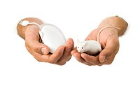 Close_up of a computer mouse and a live mouse in a mans hands
