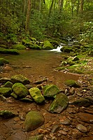 Cosby Creek, Great Smoky Mountains National Park, TN