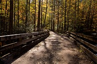 Bridge, Autumn, Tremont, Great Smoky Mountains National Park, TN