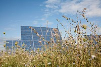Solar panels in a field of long grass and clovers