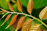 Leaves in the wild, tropical