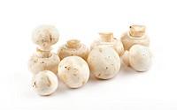 White Champignon Mushroom