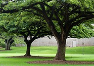 USA, Hawaii, Oahu, Honolulu  Shade trees in public park