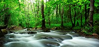 River in spring forest