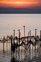 Seagulls on poles, evening, Albufera de València, Valencian Community, Spain.