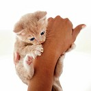 Cute little ginger kitten being held up by a woman