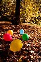 Colorful balloons lying in autumn leaves