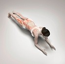 Musculature layered over a female body in a variation of dolphin plank pose showing the activity of certain muscle groups in this particular yoga post...