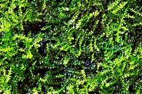 green algae texture : closes _ up