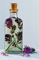 A glass bottle of lavender oil. Lavender, a genus Lavandula of the mint family with 39 subspecies, is used both as a medicinal herb and in cooking.