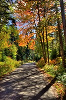Autumn Colours in Algonquin Provincial Park, Ontario, Canada