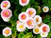 White flowerses