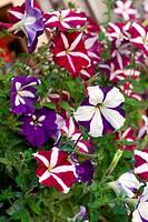 Flowerses
