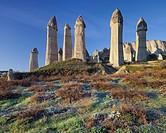 Vines and Fairy Chimney in the Valley of love, Tufa erosion, Goereme National Park, UNESCO World Nature Site, Cappadocia, Anatolia, Turkey