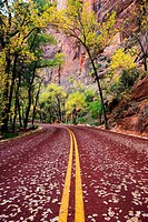 Road Through Zion Canyon