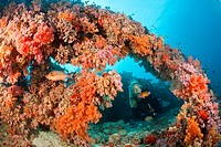 Diver at coral reef, North Male Atoll, Indian Ocean, Maldives