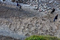 Dino tracks at playa de la Griega, up to 1.30 meter in diameter, Colunga, Asturias, Spain