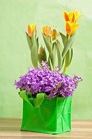 Spring bouquet from tulips and campanula blue, a close up