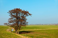 Dutch landscape with tree in spring