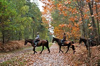 riders in the Forest of Rambouillet, Yvelines department, Ile-de-France region, France, Europe