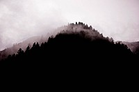 Fog Over Tree Covered Mountain