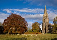 View of trees in autumn colour, sheep grazing in pasture and church, St Paul´s Church, Clitheroe, Lancashire, England, October