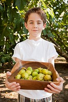 Caucasian boy picking fruit in orchard