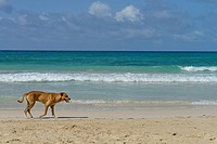 Lonely dog wandering on a beach