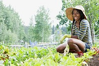 Pretty, African-American woman working in vegetable garden (thumbnail)