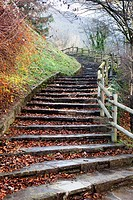 stone steps with leaves