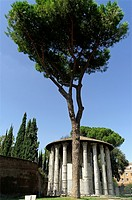 Rome Italy  Temple of Vesta in Rome