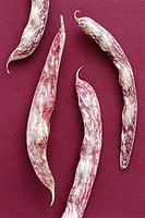 Cranberry bean pods