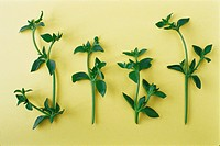Fresh green basil on yellow background