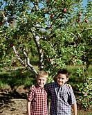 Boys standing in front of an apple tree