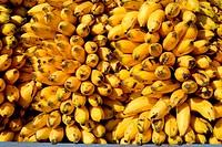 Healthy fruit ; ripe yellow color eliachi banana ; Sangli ; Maharashtra; India