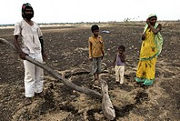 Rural family working on agricultural land ; Marathwada ; Maharashtra ; India
