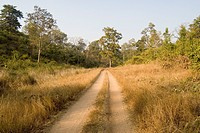 Path in Betla national park ; Palamu ; Daltnganj ; Jharkhand ; India