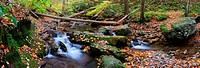 creek in forest panorama
