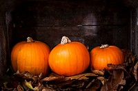Three pumpkins on autumnal leaves